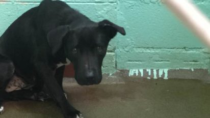 14291714 10209242910102078 6078681304269134236 n e1478161274503 412x232.jpg - Neglected Shelter Dog Who Wouldn't Turn From The Wall Underwent Transformation