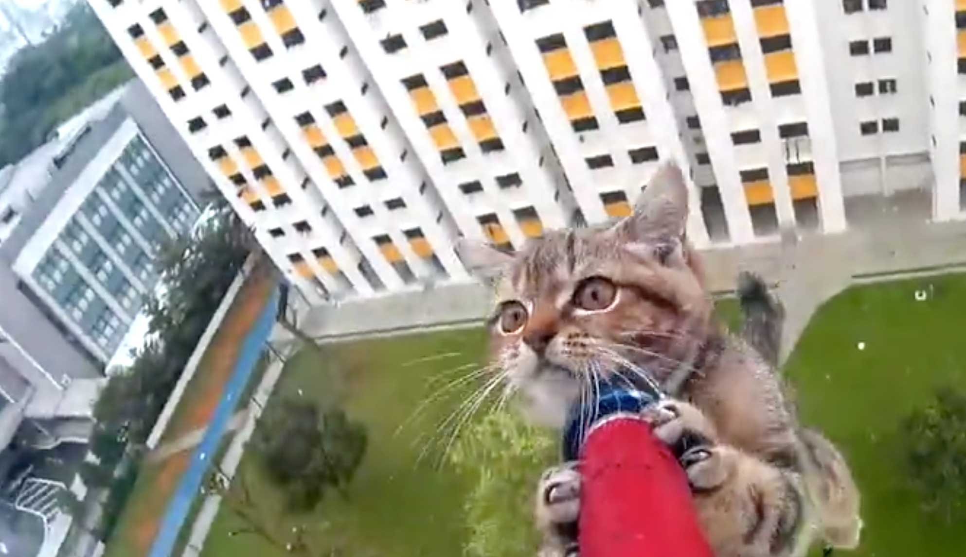 kittensavedfromledge.jpg - Helpless Kitten Stranded On A Ledge Was Saved By Rescue Officer