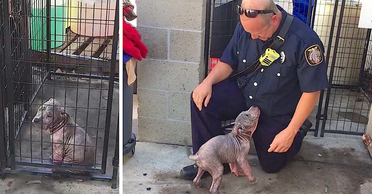 chunkie.jpg - Puppy Was Sad At Shelter Until She Saw Firefighter Who Saved Her From Bad Owners