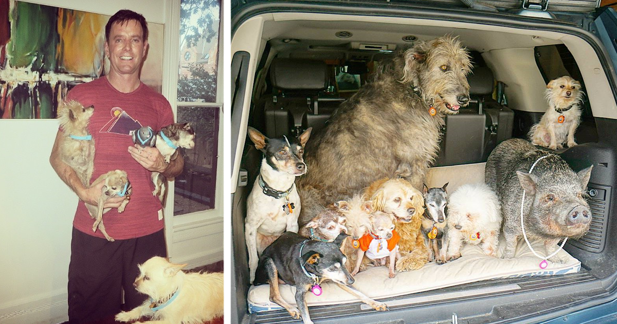 insta.png - Man Opened His Home To Senior Dogs After The Loss Of His Beloved Pet