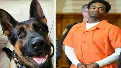 jethro police dog 412x232.jpg - Judge Praised After Handing Maximum Sentence To Convict Who Shot Police Dog