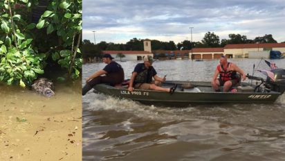 louisiana rescuers take action 412x232.jpg - Rescuers Saved Drowning Dog After Spotting Him Catching His Final Breaths