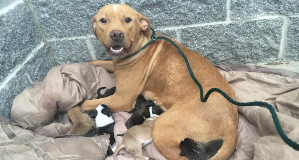 pb.jpg - Mother Dog Went To Great Lengths To Save Her 11 Puppies