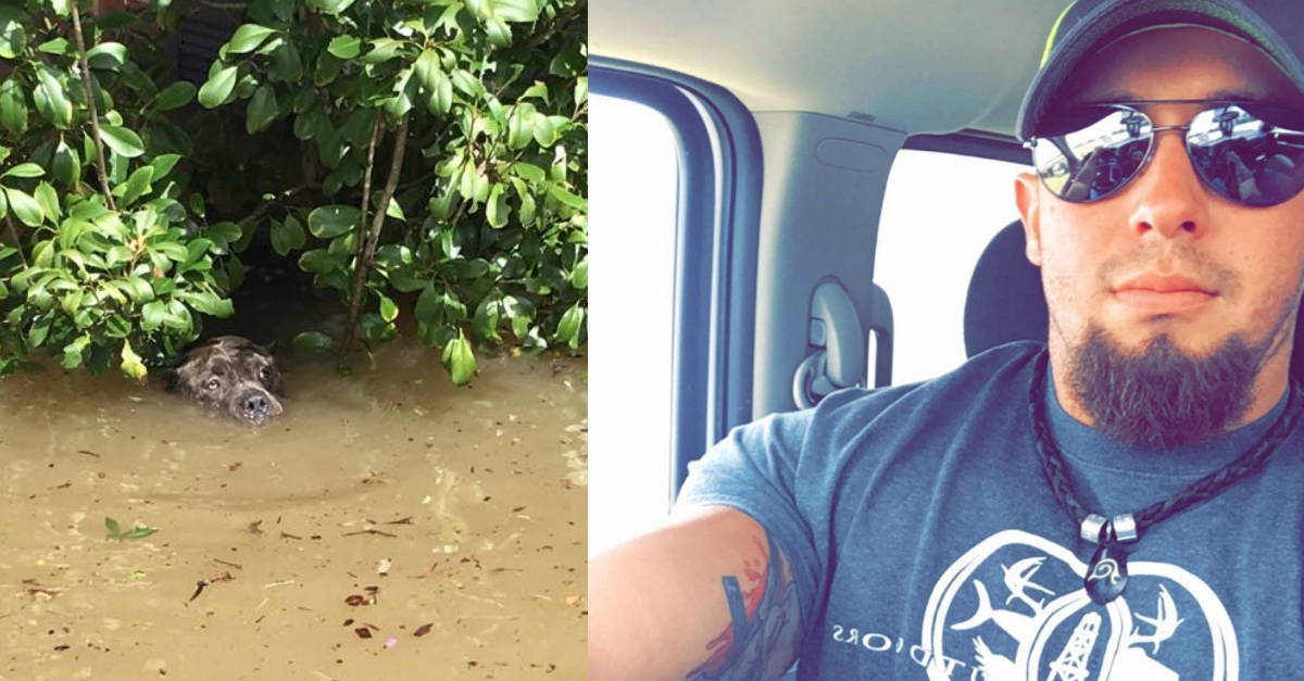thumb sadie.jpg - Man Saved A Dog Almost Completely Submerged In 8 Feet Of Water