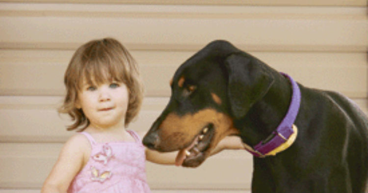 bby 1.jpg - Protective Dog Grabbed Toddler And Threw Her Away From Venomous Snake To Save Her Life