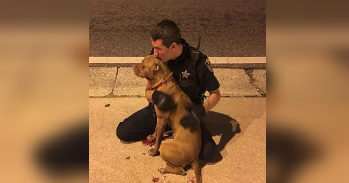 cop comforts pit bulls.jpg - Police Officers Rescued Two Frightened Dogs They Found In The Middle Of The Road