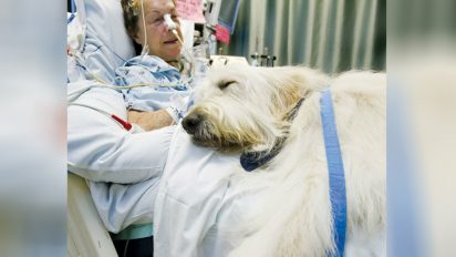 pet visit to hospital 412x232.jpg - Giving The Will To Live: Innovative Pet Visitation Program At Hospital Saves Lives