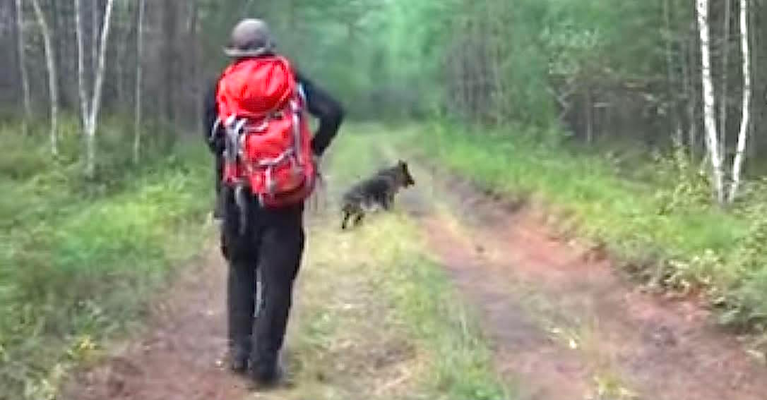 unnamed8.jpg - Girl Missing For 11 Days Found In The Woods After Rescuers Followed Hero Dog