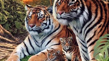 tiger 412x232.jpg - How Many Tigers Can You Find In This Picture? Hint: There Are More Than Four!
