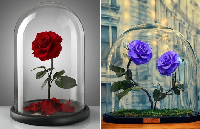 1 5.png - 【話題】映画「美女と野獣」に登場する枯れない魔法の薔薇が実際に・・!?