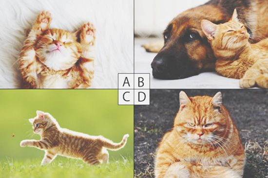 20150901005817 neko all.jpg - 彼氏作り‼猫心理テストで見る異性から見たあなたの魅力
