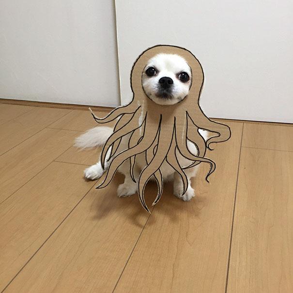 dog costume cardboard cutouts myouonnin 21 580f541648112  605.jpg - 自分のチワワのペットと素晴らしいコスプレーをする女性