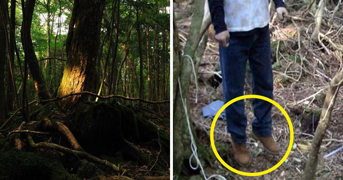 1708260700th.jpg - 한 번 들어가면 나올 수 없는 죽음의 숲 '주카이'... 일본의 '자살명소'