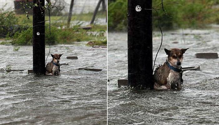 img 59a710b593a3b.png - 暴雨の打たれながら震えていても最後まで待った犬