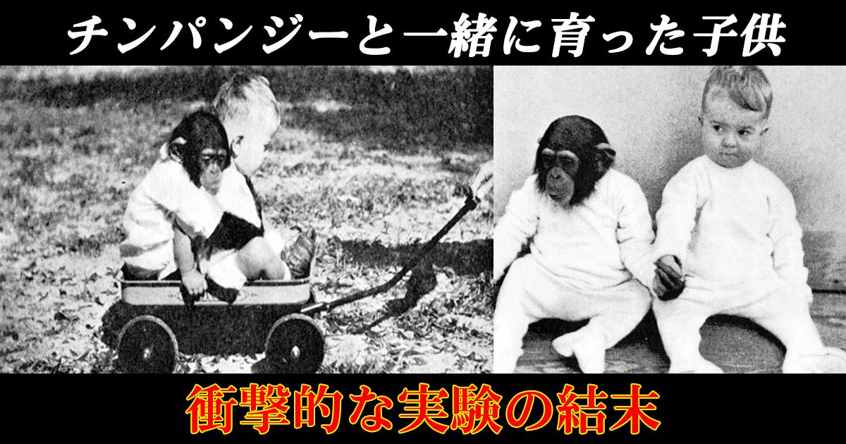 chinpan th.png - チンパンジーと一緒に育った子供。衝撃的な実験の結末とは!?