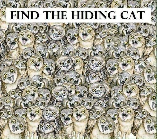 e689bee8b293e592aa1.jpg - 傻眼貓咪!網路瘋傳能在「1分鐘找到貓咪」的人IQ高達140!網友看到解答:「這是耍我嗎?」