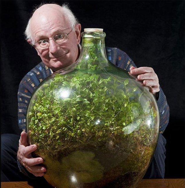img 59ae37f1b7ef7.png - Inglês cultiva planta em garrafa, que não recebe água há 56 anos, mas permanece verde e viva
