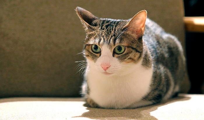 img 59c2b8d425f18.png - 猫に間違って引っ掻かれて「勃起」できない可能性もある