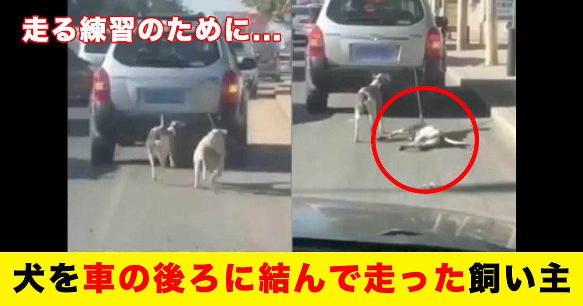 88 32.jpg - 走る練習のために...犬を車の後ろに結んで走った飼い主