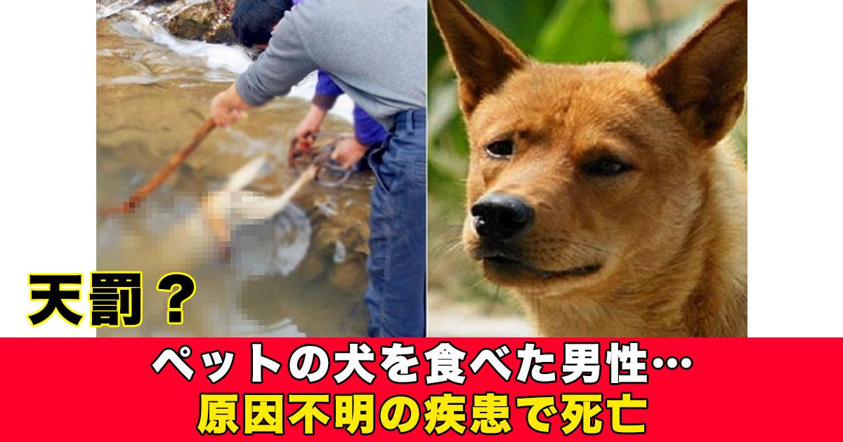 88 35.jpg - ペットの犬を食べた男性…原因不明の疾患で死亡