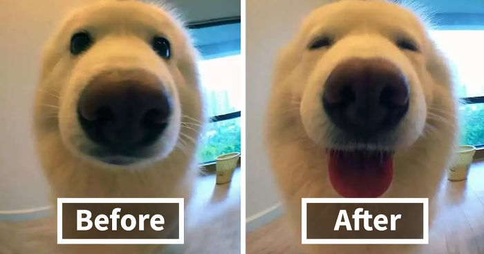 before after called good boy fb  700 png.jpg - When Animals Being Called A Good Boy...