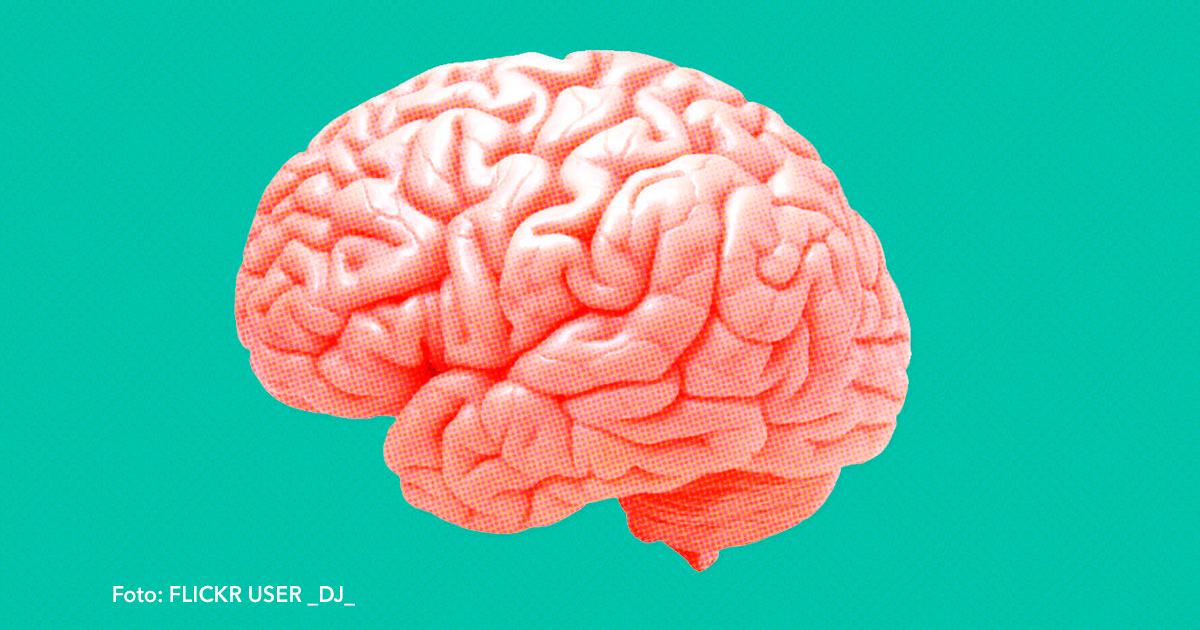 cover 23.jpg - Excelentes alimentos que mantendrán sano tu cerebro.