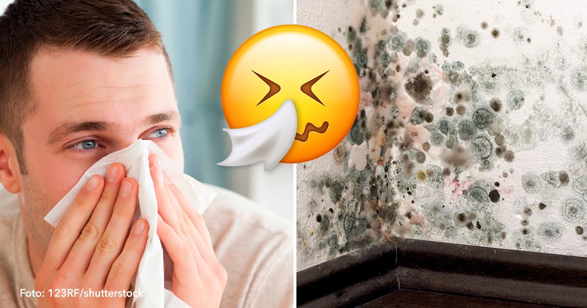 cover 61.jpg - 10 señales de advertencia sobre la enfermedad del moho y cómo detenerla