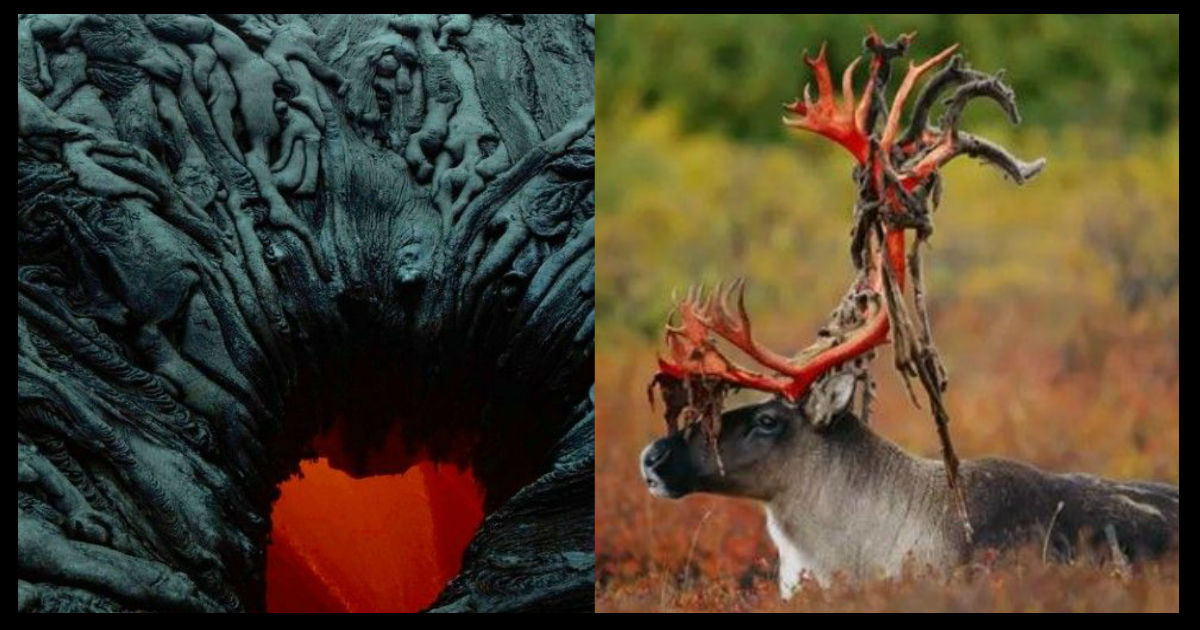 nature ttl.jpg - 【観覧注意】何よりも怖い!?自然界のホラー