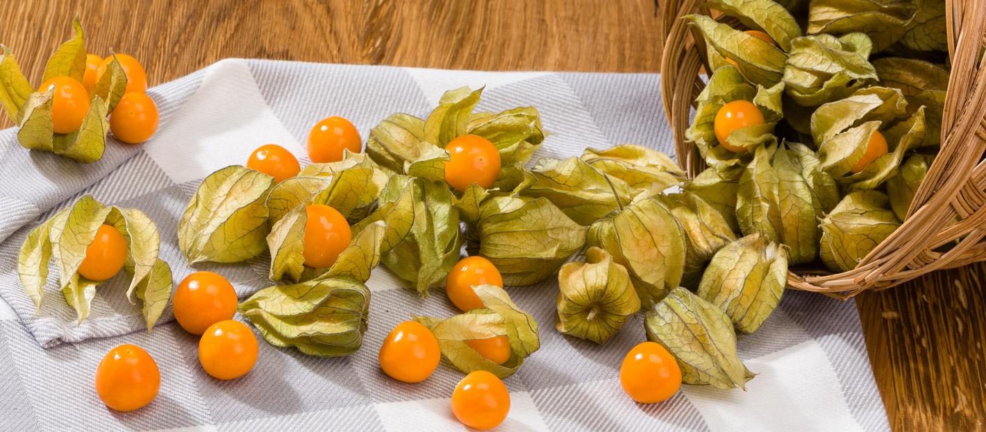 physalis 2a 1.jpg - Golden Berry: a frutinha milagrosa