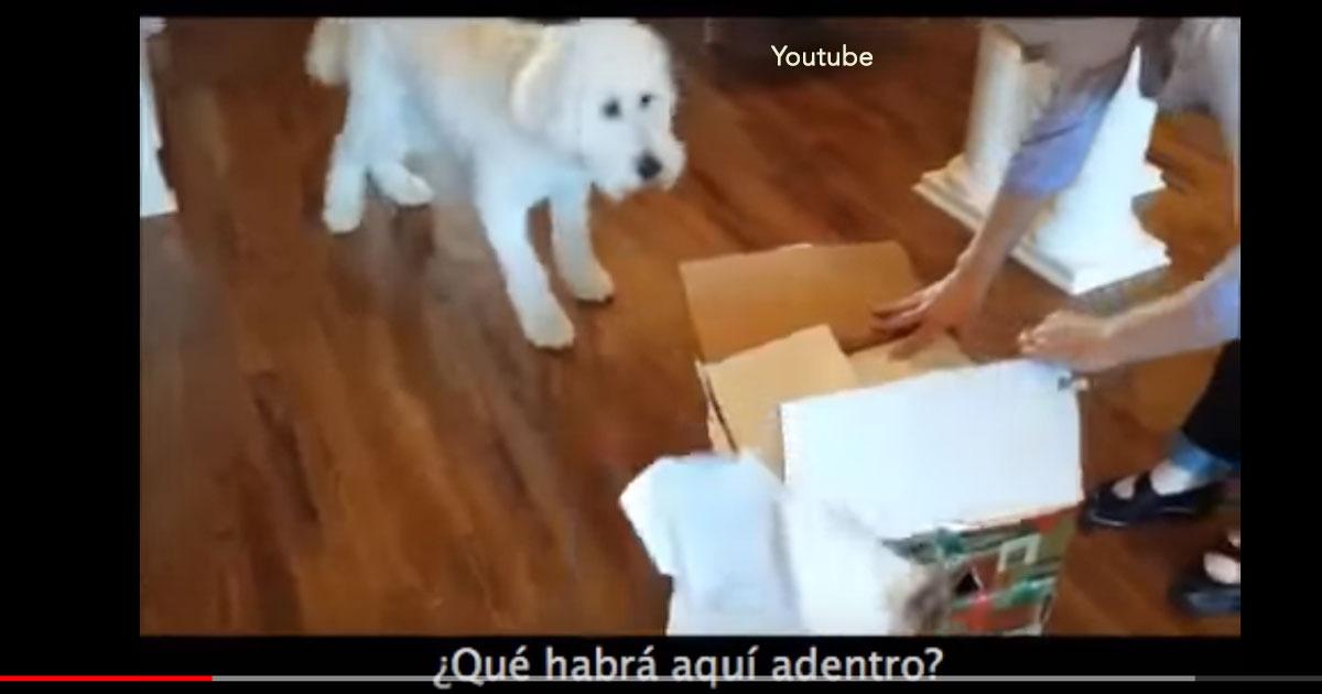 portada 40.jpg - Increíble video de un perro de la familia que recibe de regalo una nueva mascota, su felicidad ha inundado de comentarios las redes