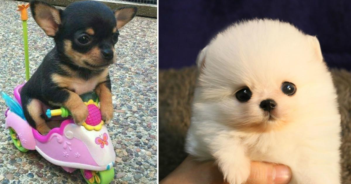 puppyfin.jpg - 20 fotos de cachorros pequenininhos. O que não tem de tamanho, tem de fofura