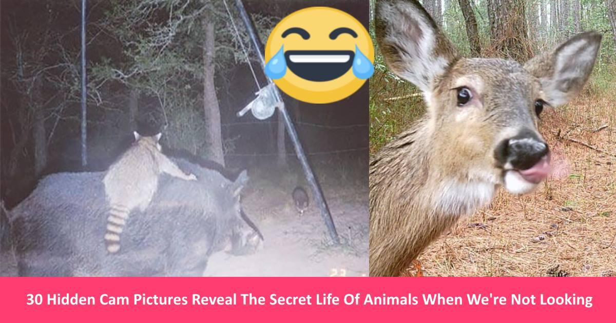 animalfun.jpg - 30 Hidden Cam Pictures Reveal The Secret Life Of Animals When We're Not Looking