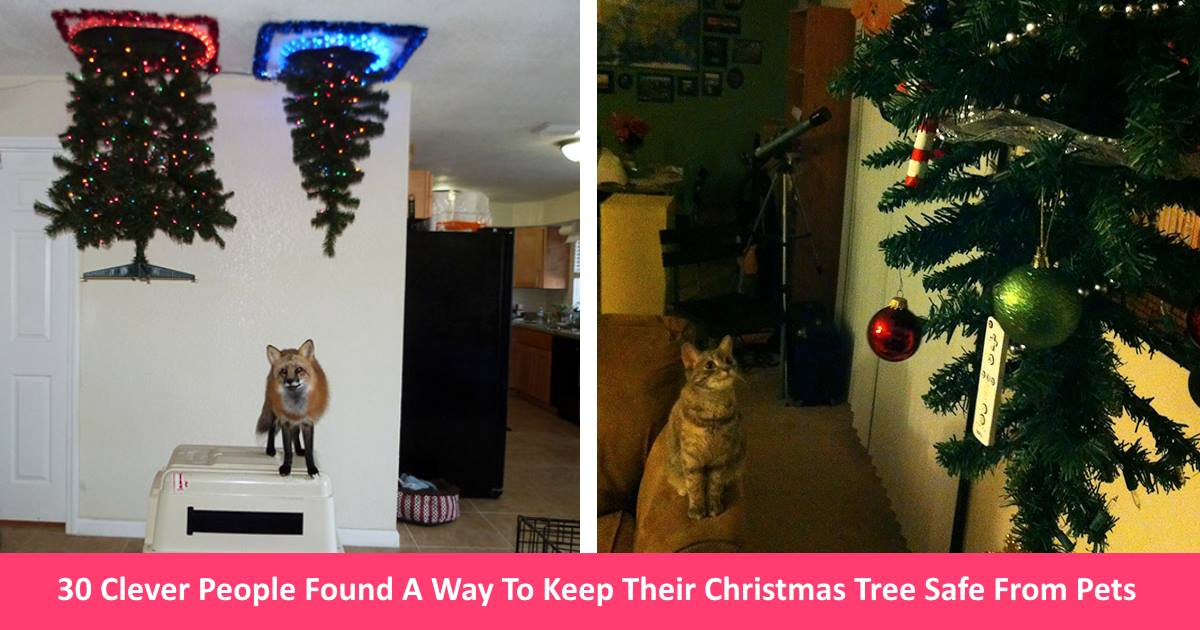 30 clever people found a way to keep their christmas tree safe from curious animals small joys