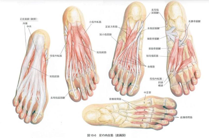 が つる 足 病気 指 の