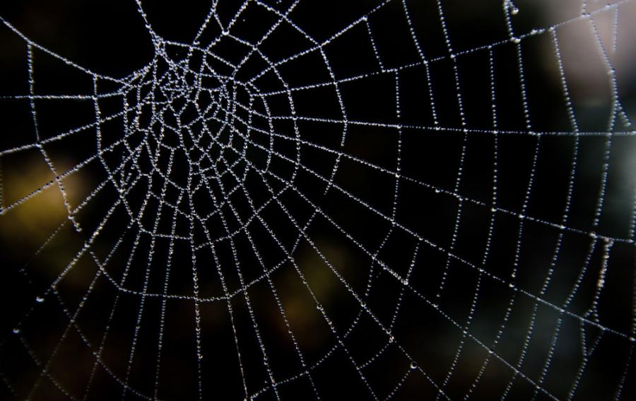 img 5a362084dbf69.png - 地蜘蛛とは?どんな生態?