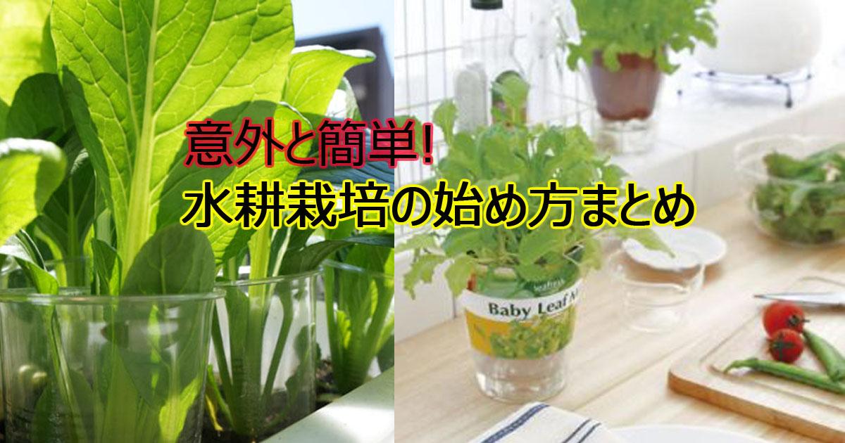 suikousaibai.jpg - 家庭菜園にチャレンジ!簡単手作り水耕栽培まとめ