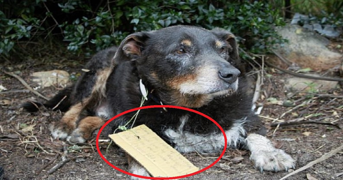 louie 1.jpg - Dog Dubbed Hero After Disappearing For Several Hours Only To Rescue Another Dog