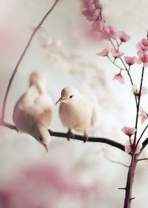 壁紙 白い鳥と桜の模様에 대한 이미지 검색결과