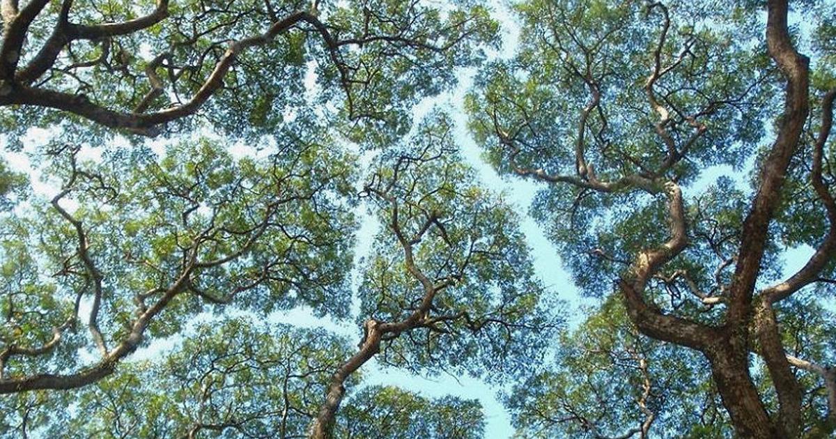 "7 144.jpg - ""모두 함께 자라자"" 서로를 배려하며 성장한 나무들"