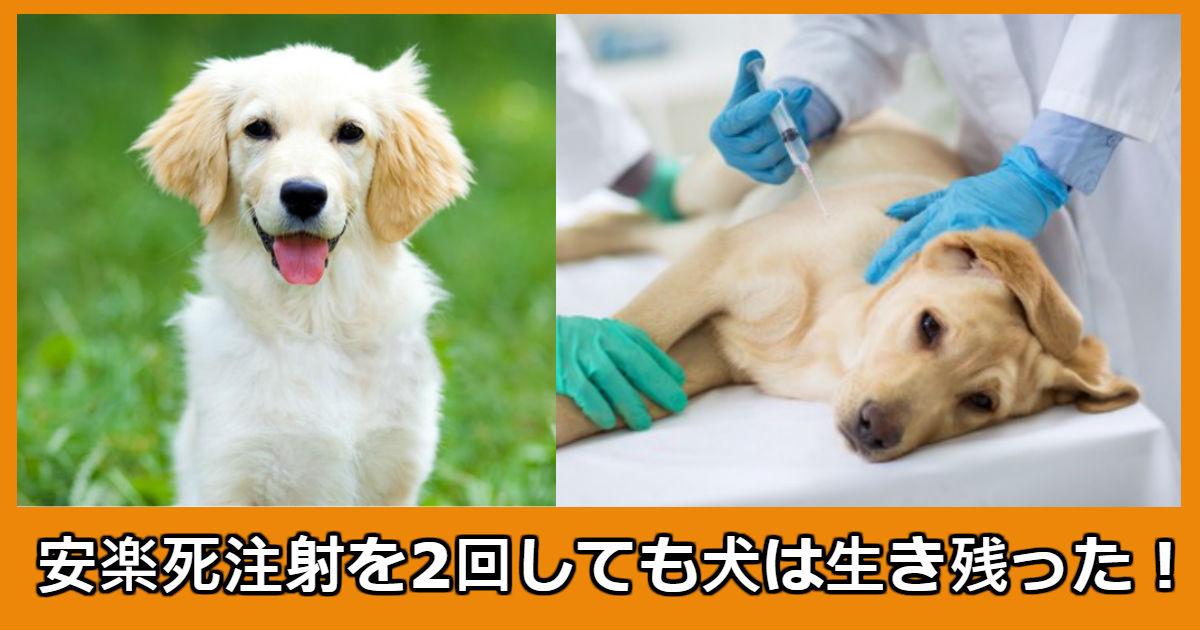 dog.jpg - 2度の安楽死注射をした犬に起きた奇跡