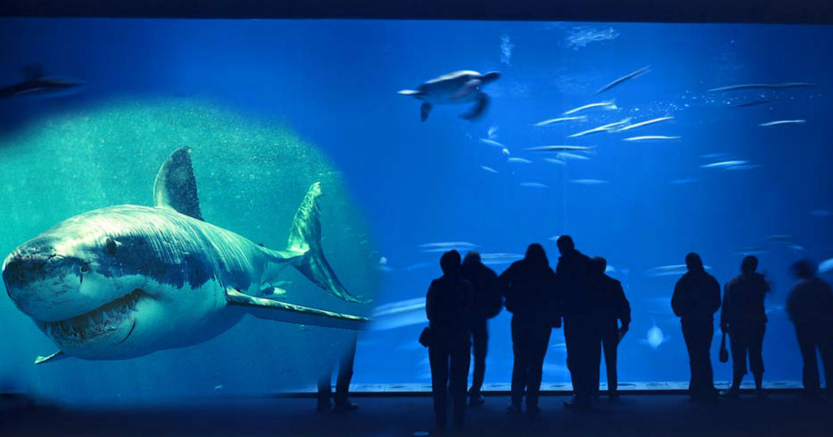 gggggggg.jpg - Man Charged By Shark After Tapping On Aquarium Glass Display