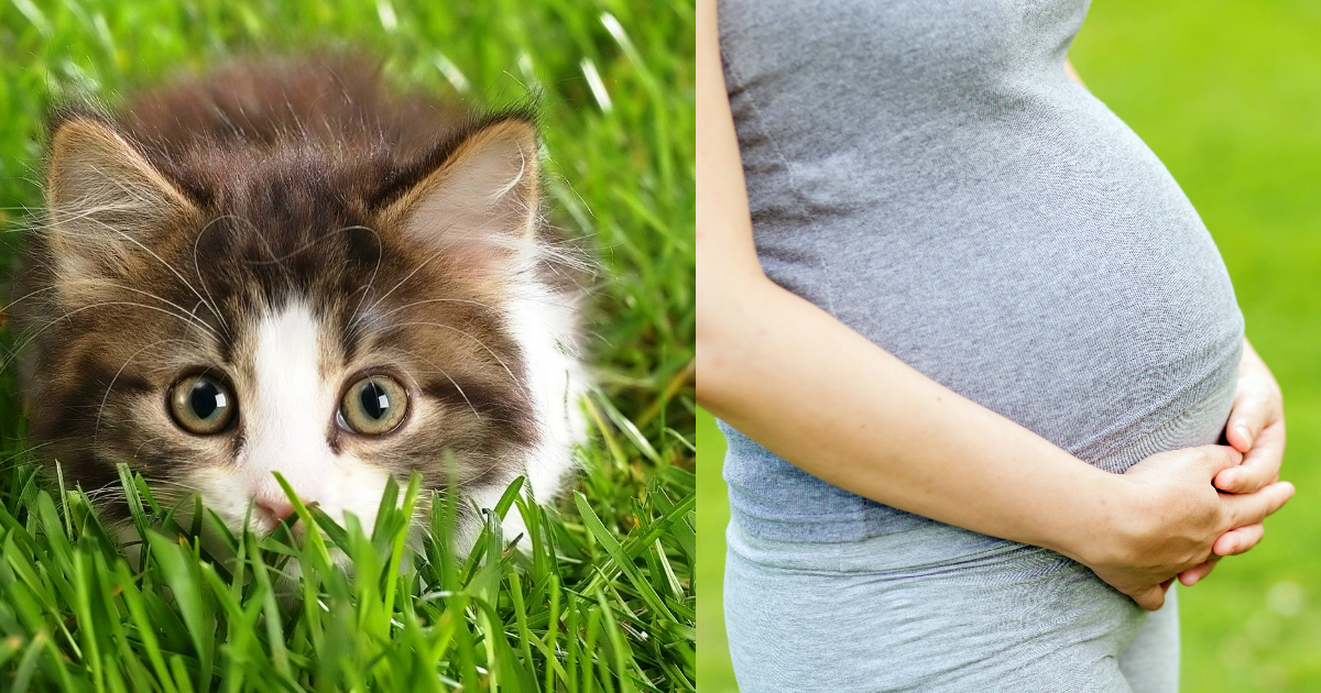 kitten.jpg - A Woman Gave 'Birth' To A Cat And Documented The Process In Photo Shoot