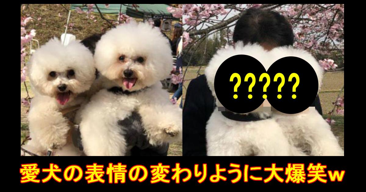 doggo.jpg - 母親・父親に対して差がありすぎる愛犬の表情に爆笑!