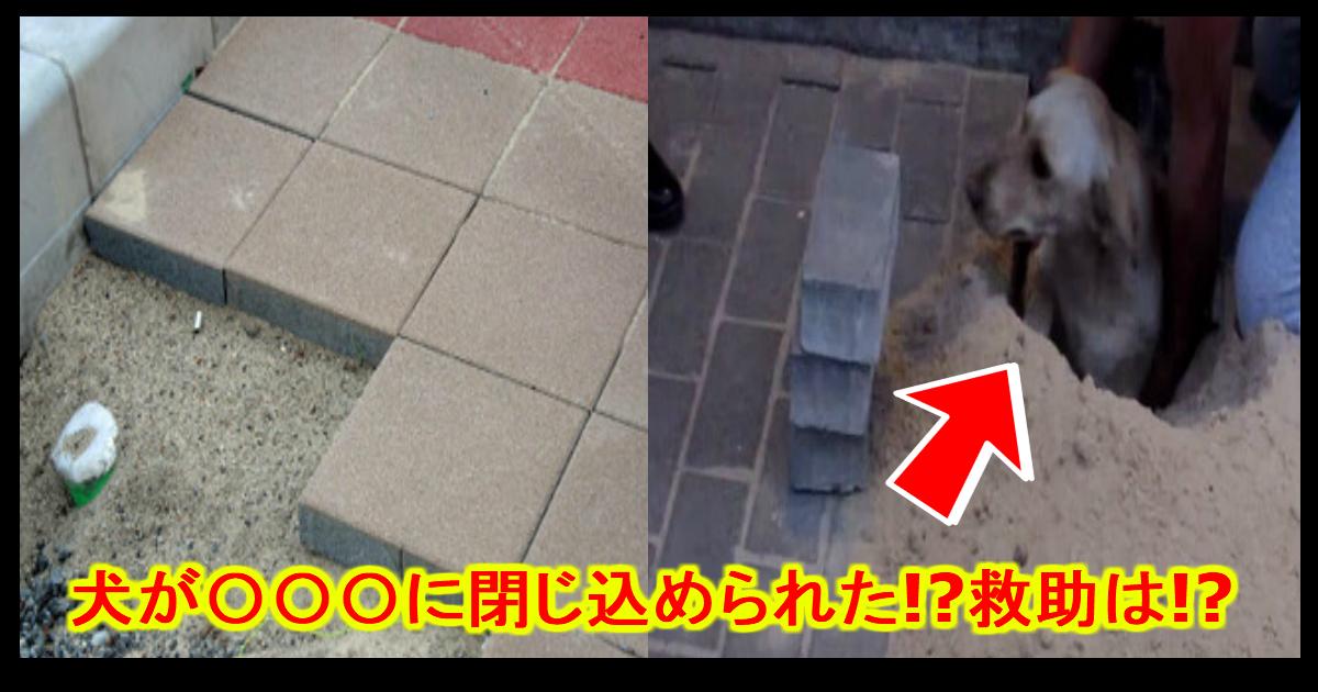 unnamed file 27.jpg - 【ショック】地面ブロックにワンちゃんが閉じ込められた!?