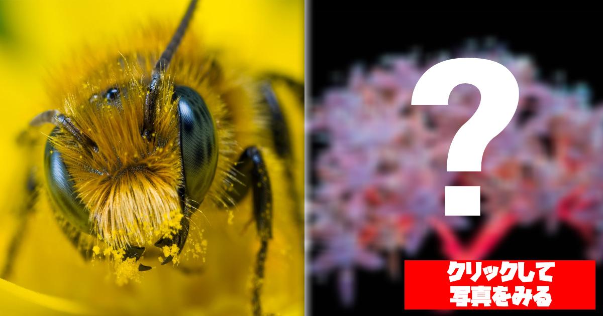 bees.jpg - 綺麗で不思議な花....これ『昆虫たちの視界を再現』したものなんです!