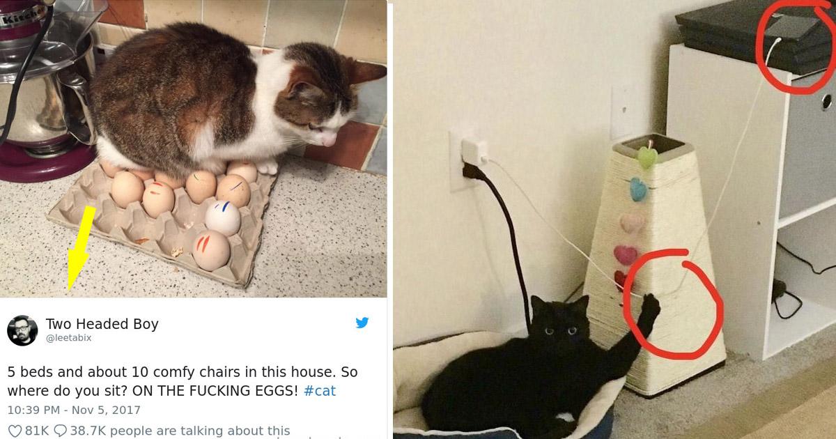 cats2.jpg - Ces images hilarantes qui prouvent que les chats sont les plus grands des tyrans