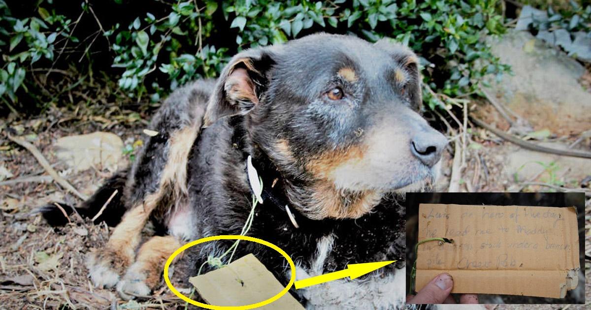 dogfriend.jpg - Cette histoire d'un chien âgé de 12 ans qui a sauvé son meilleur ami égayera votre journée