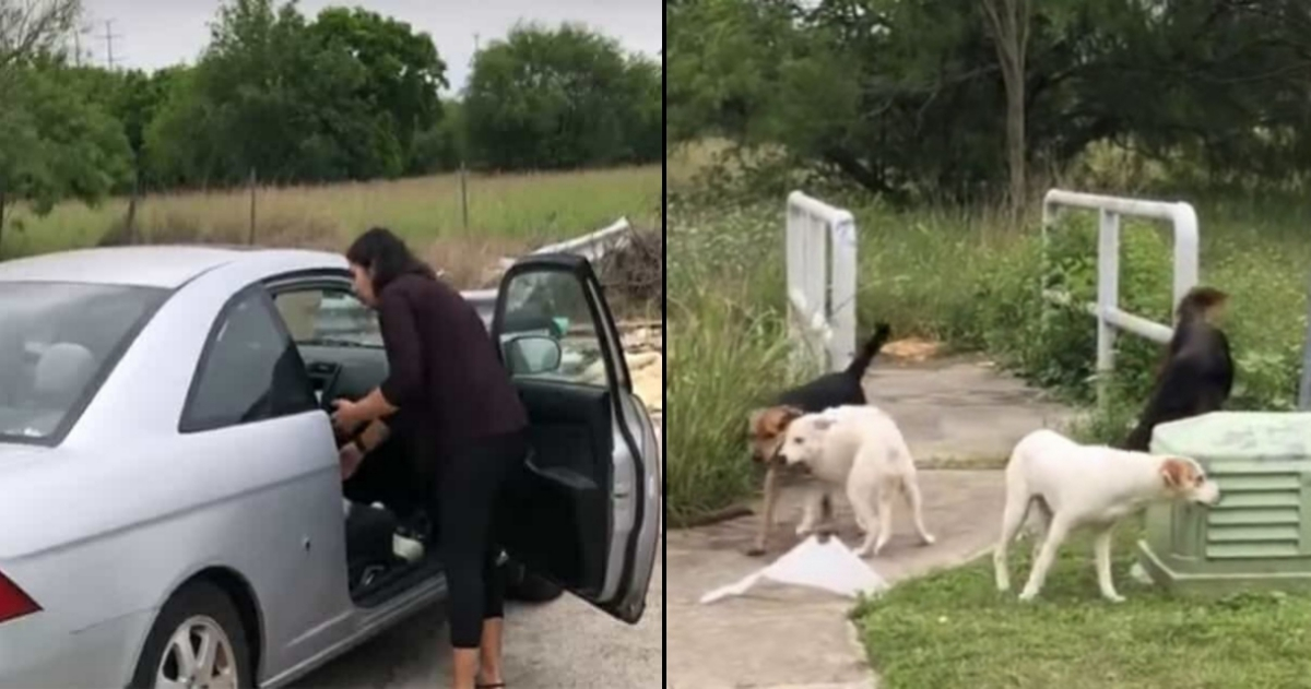 doggies tn 4.jpg - Woman Caught On Camera Dumping Her Four Dogs, Received What She Deserved