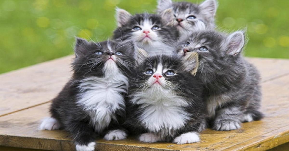 p12wehq6ak3r61u81t4e.jpg - 알다가도 모르겠다! 품종 별로 다른 '고양이'들의 '진짜' 성격 7