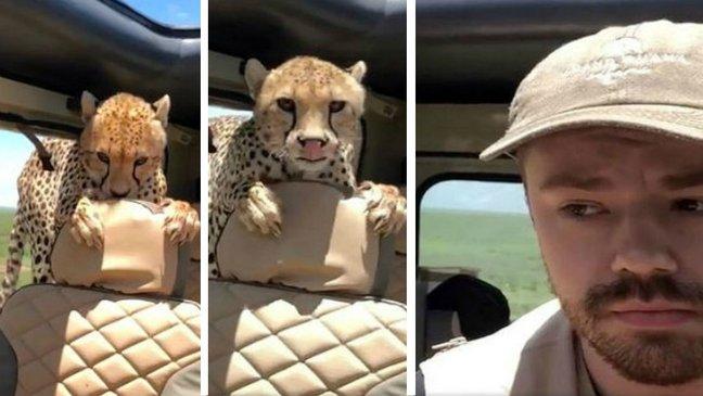 qwereqwewq 1.jpg - 何か食べたくて車に乱入した「野生チーター」に向き合う男性(映像)